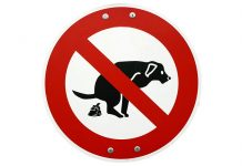 Dog Poop Disposal Guide