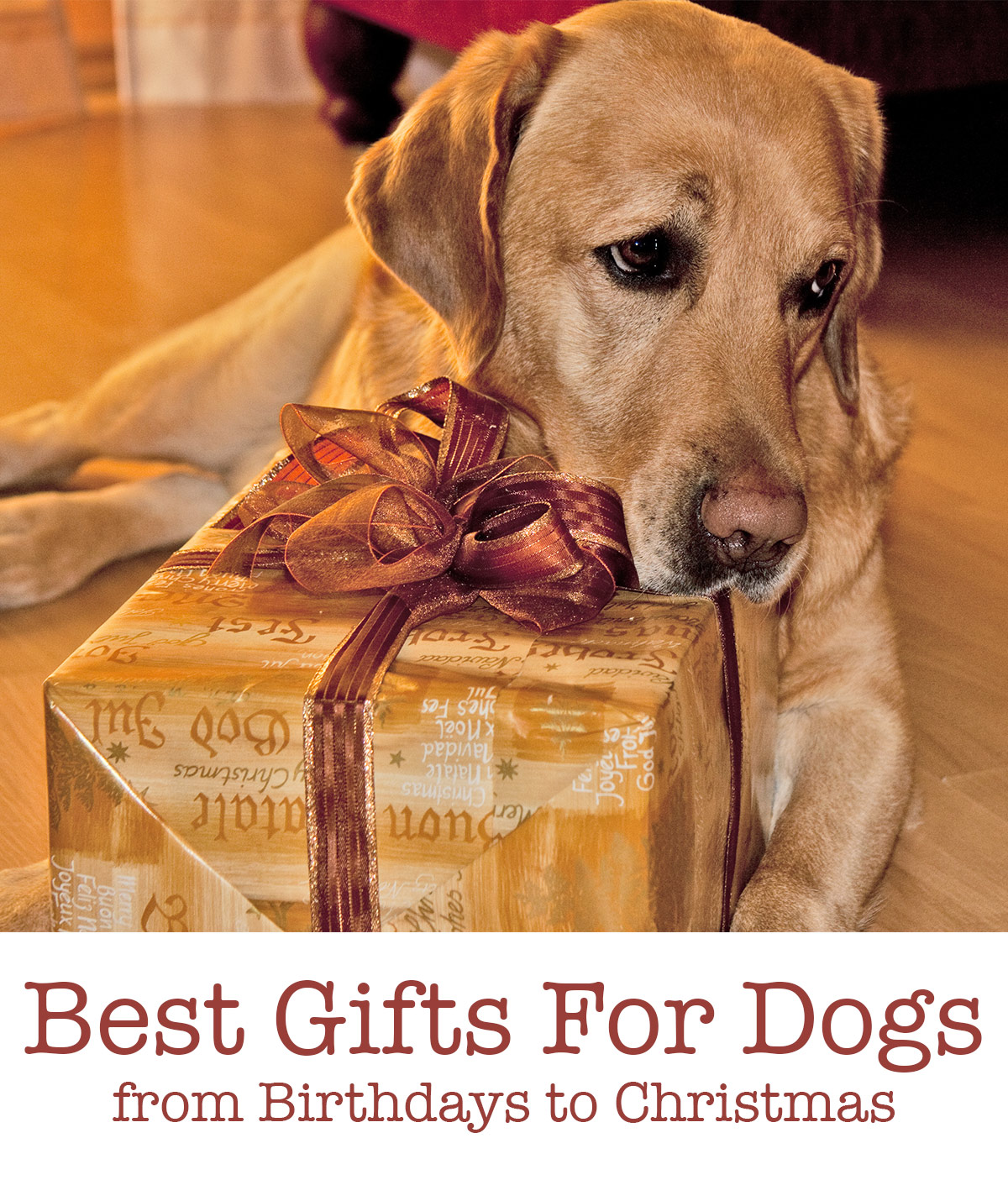 best dog presents