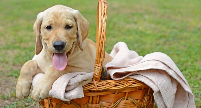 Funny Dog Names - To Give Your Pup A Happy Start