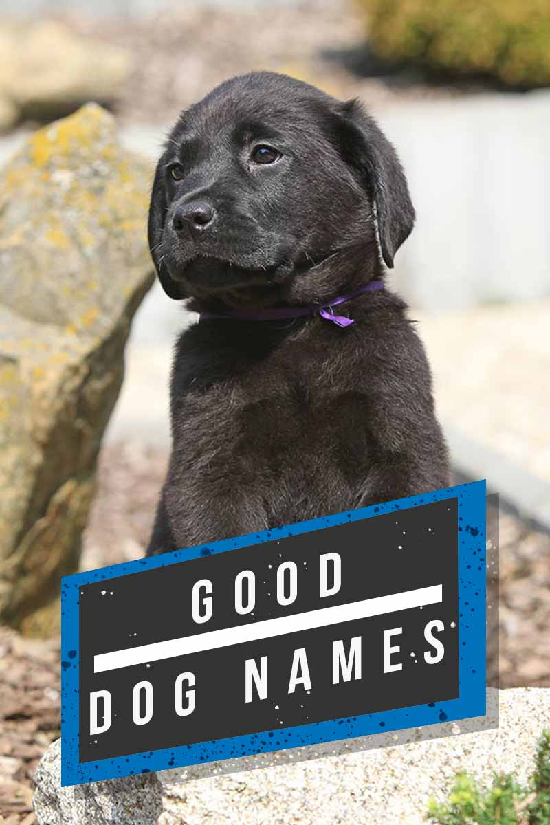 Good dog names - Great name ideas for your dog