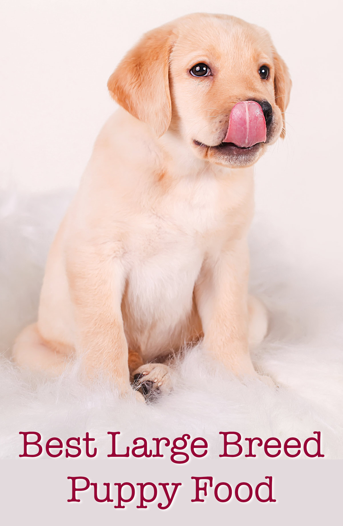 Best Breed Puppy Food Make The Right Choice