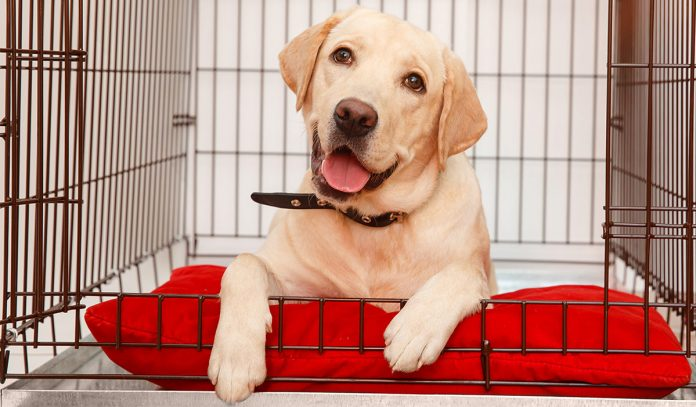 best puppy crates