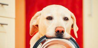 best dog food for sensitive skin