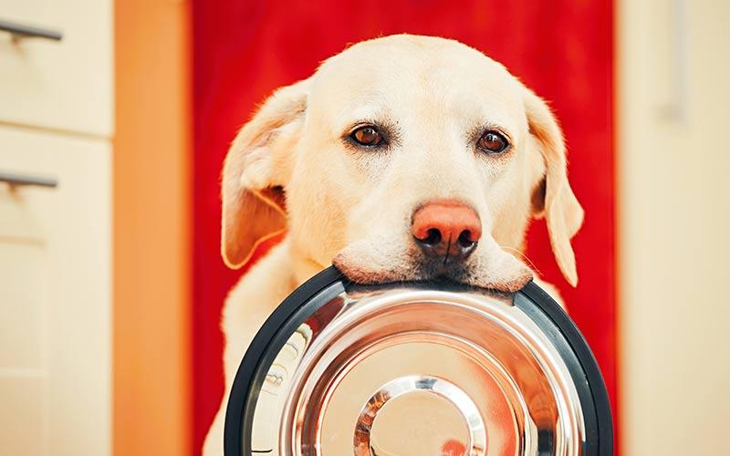 Best Dog Food For Sensitive Skin - Top Brands Reviewed