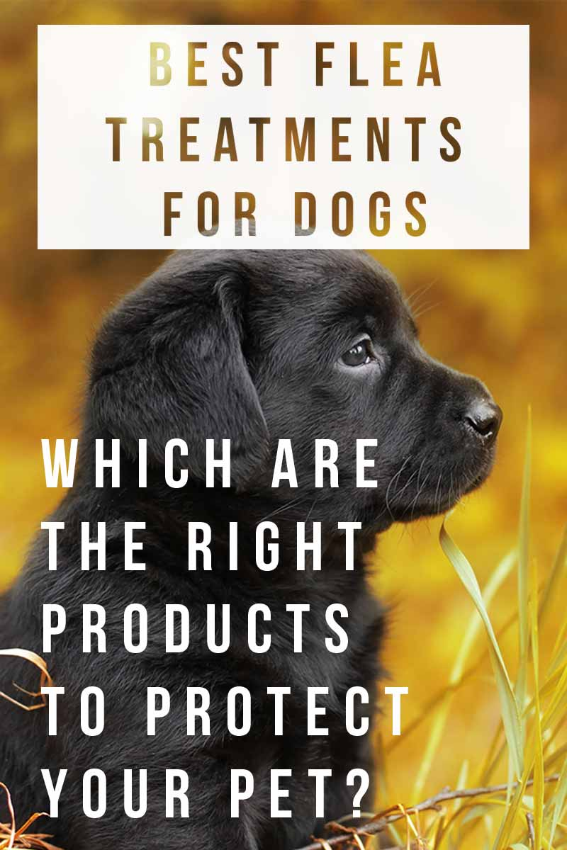 Best Flea Treatments For Dogs - Which are the right products to protect your pet?