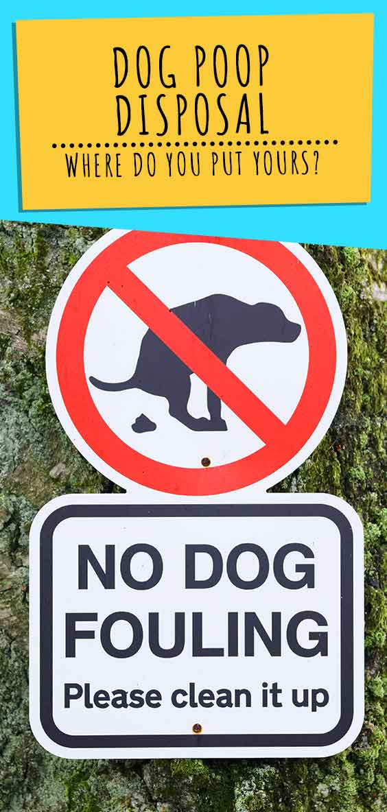 dog poop disposal