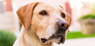 best flea treatments for dogs