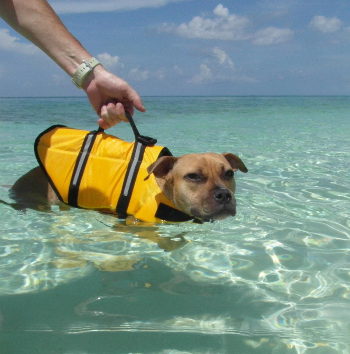 dog life jacket handle