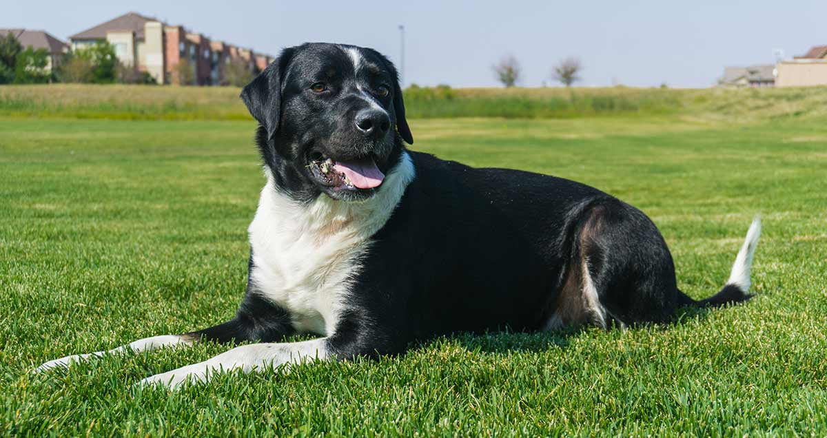 Mixed Breed Dogs Is It Wrong To Create Hybrid Dog Breeds
