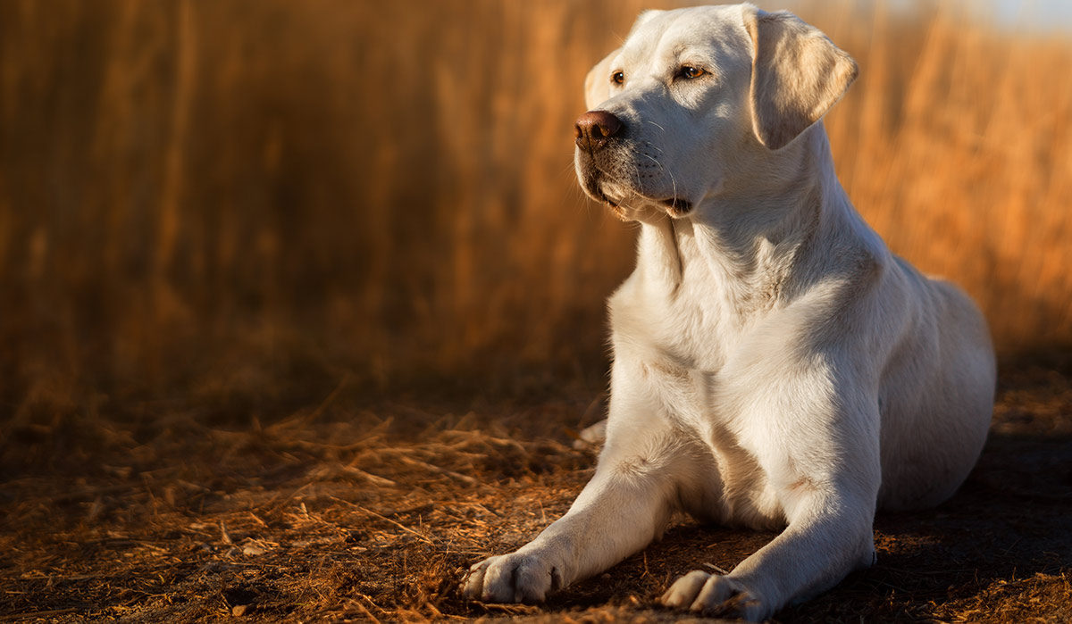 Tough Dog Names - Scary, Fierce, Strong, Guard Dog Inspired