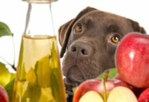 What Is The Best Glucosamine For Dogs - And Does It Really