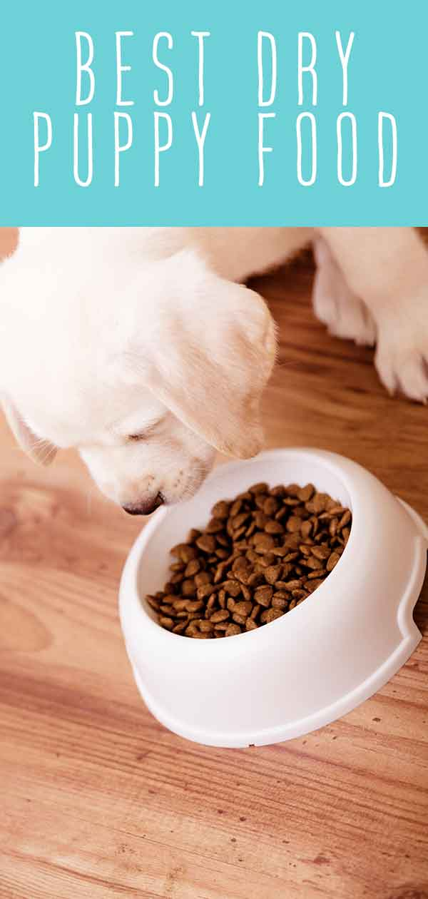 best dry puppy food