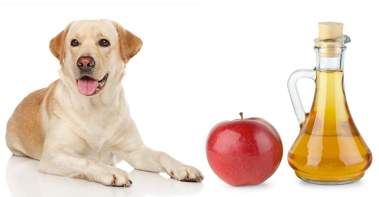 apple cider vinegar for dogs