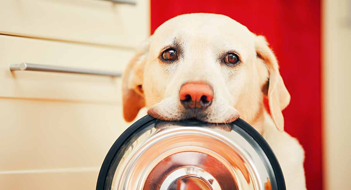 Best Dog Food For Sensitive Stomach Issues - Tips And Reviews