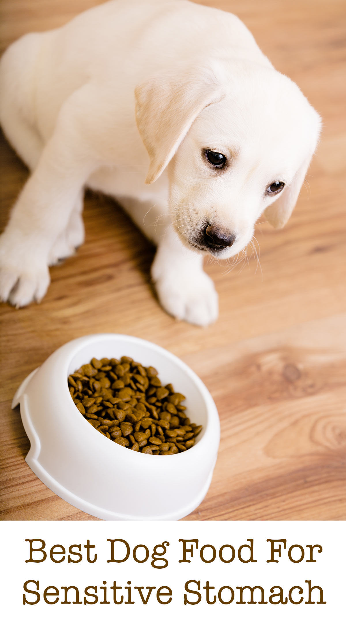 Best Food For A Puppy With A Sensitive Stomach