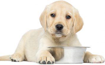 best dry puppy food