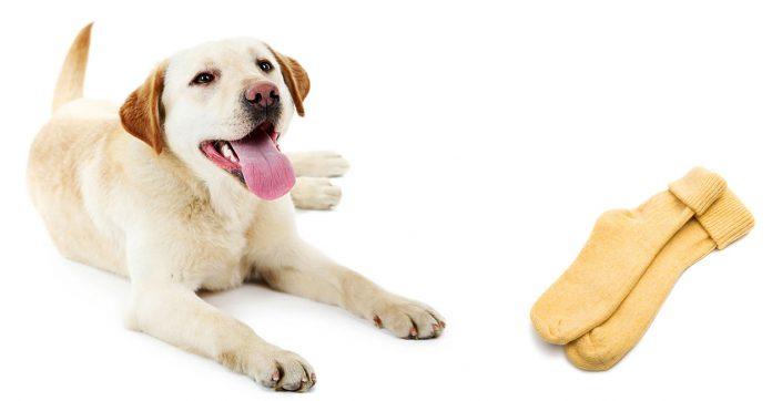 my dog ate a sock