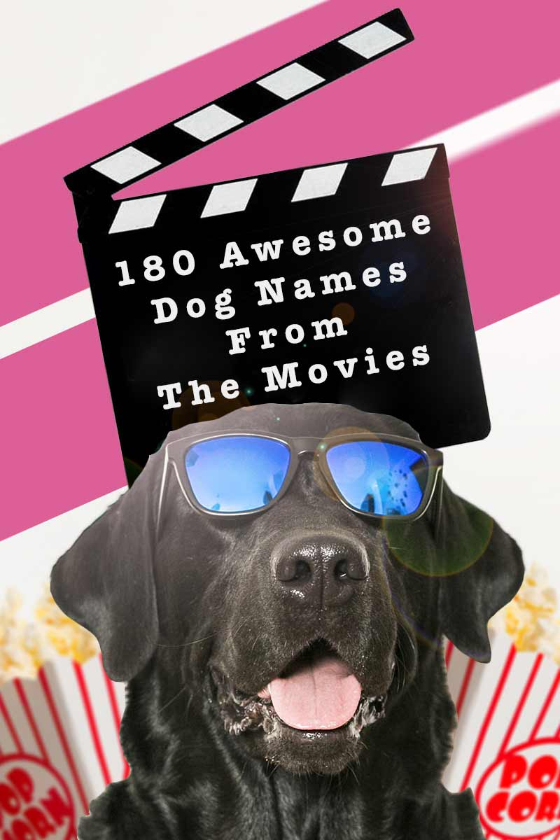 180 Awsome dog names from the movies - Dog name list