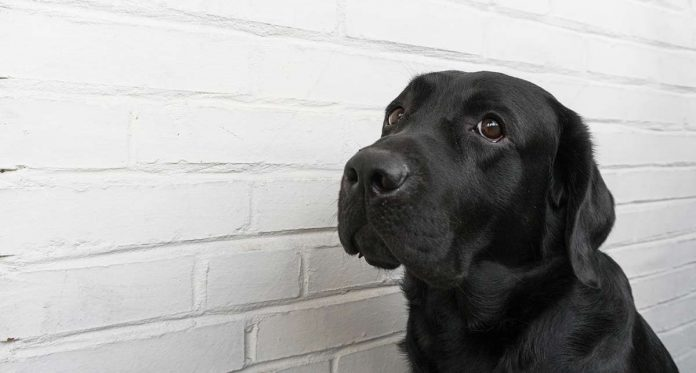 How to help a nervous dog