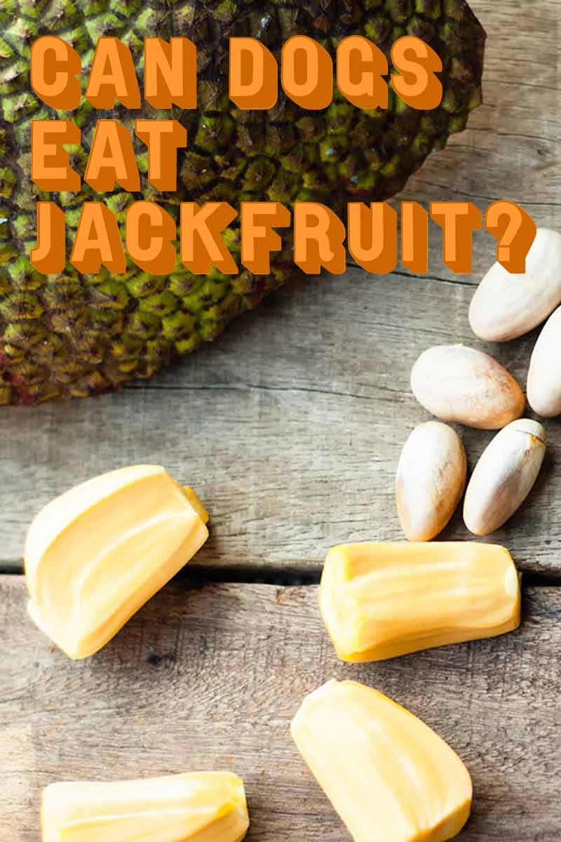 Can dogs eat Jackfruit - Home cooking for dogs.