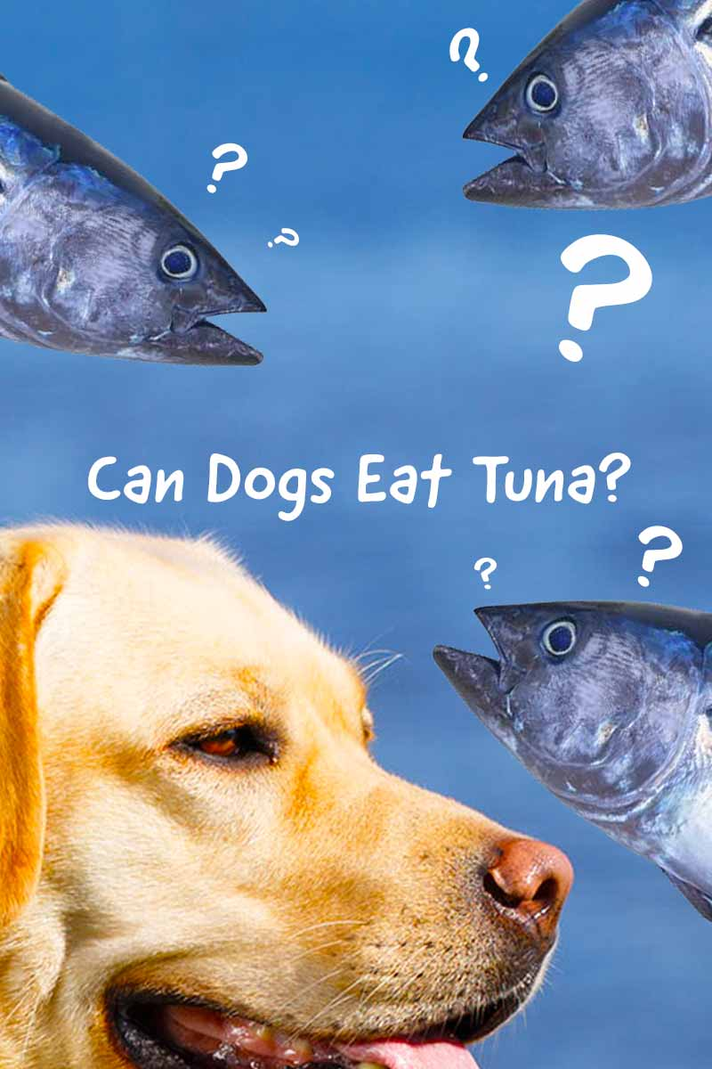 Can Dogs eat Tuna? - Home cooking guide for dogs.
