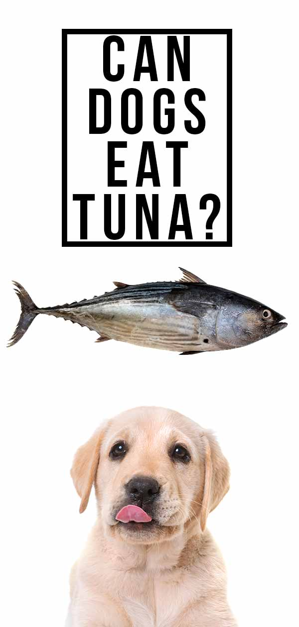 can dogs eat tuna
