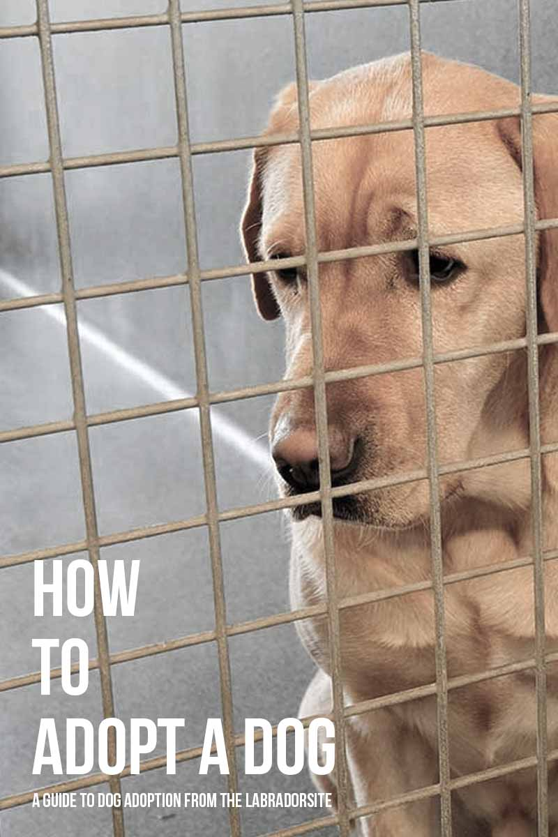How to adopt a dog - A guide to dog adoption from The Labrador Site.