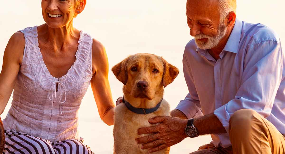 Guide Dog Rehoming >> Labrador Rescue And How To Adopt A Dog A Dog Rehoming Guide