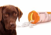 Birth Control For Dogs: What Are The Best Options For Your Pet?