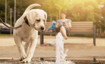 best dog water fountain