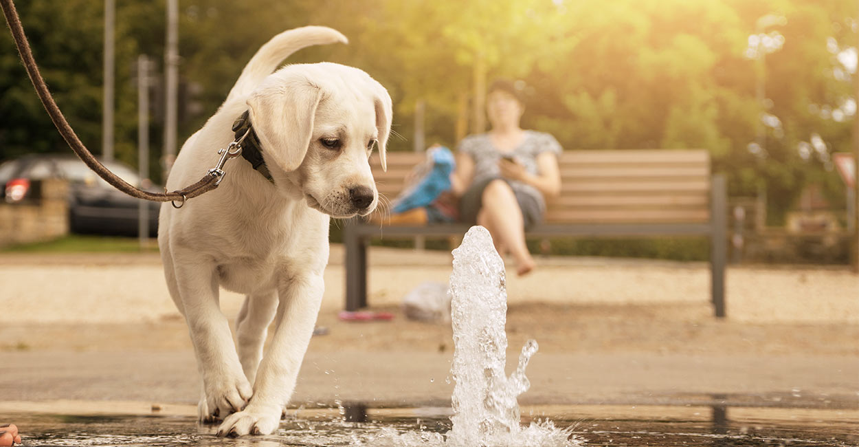 Best Dog Water Fountain Options Small To Large Manual To Automatic