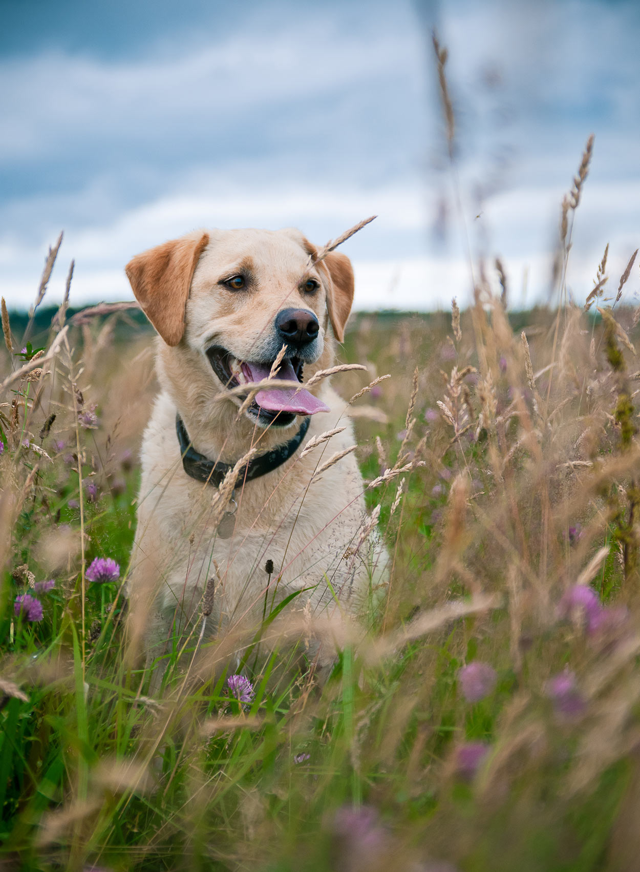 180 Ideas For Choosing The Best Hunting Dog Names