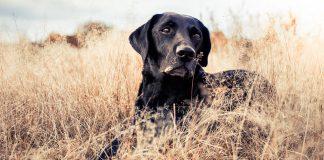 hunting dog names