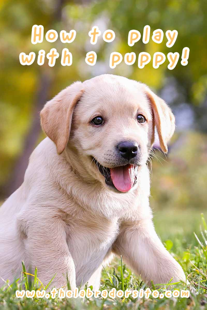 How to play with a puppy! - A guide to help you get the best out of playtime.