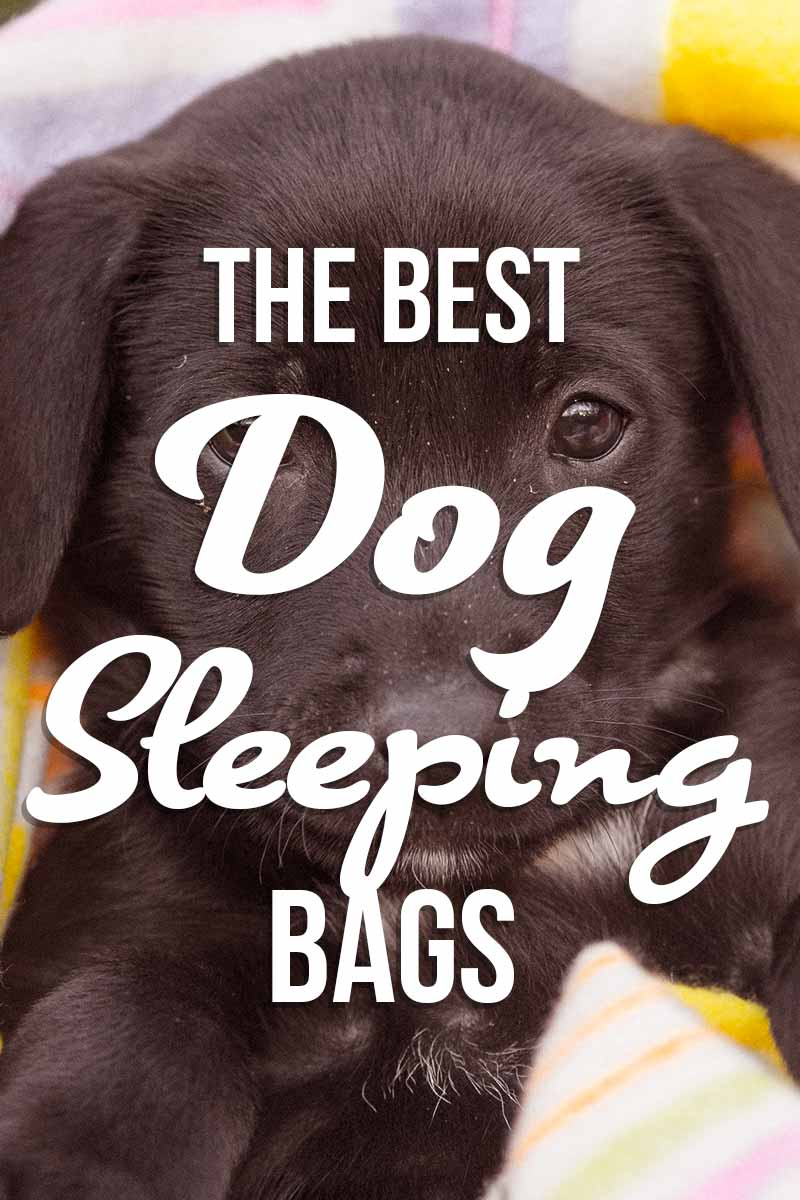 The Best Dog Sleeping Bag - Great product reviews from The Labrador Site.