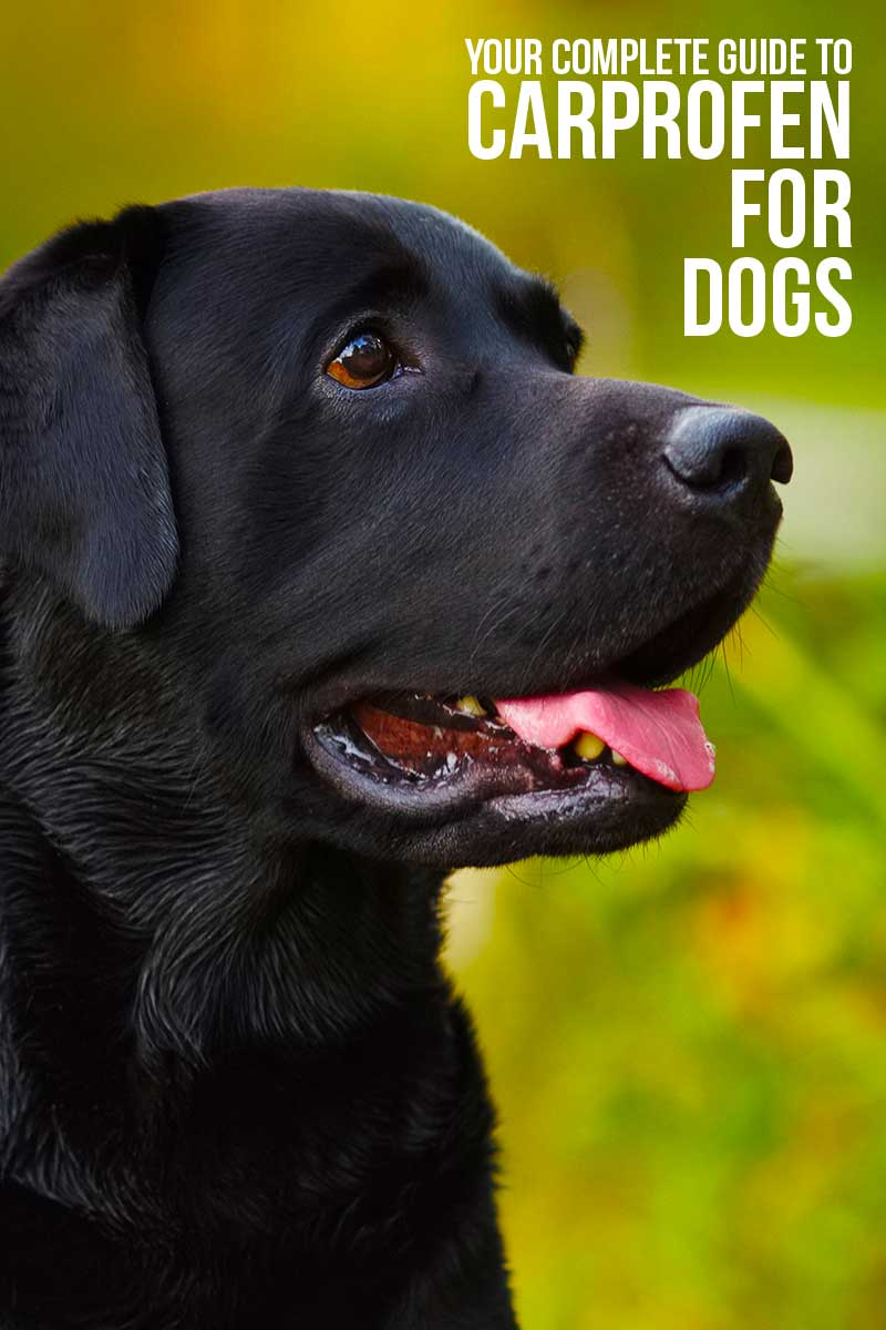 Carprofen For Dogs - Your complete guide.