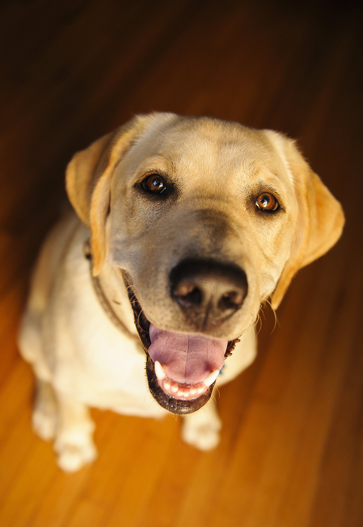 Can Dogs Eat Pork? A Guide To Pork and Pork Bones or Ribs for Dogs