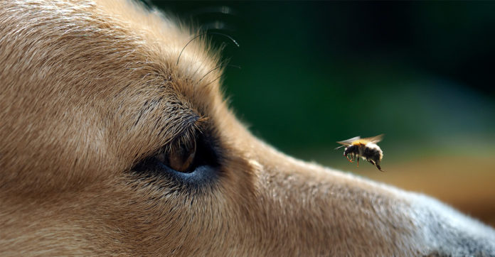 dog got stung by a bee