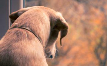 dog parasites - sad dog