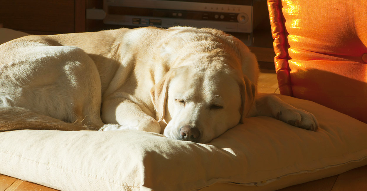 Lipoma in Dogs - Fatty Tissue Tumors And What They Mean For