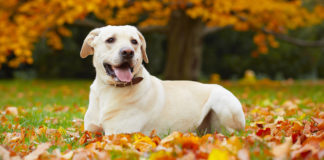 Is it safe to use Neosporin on dogs?