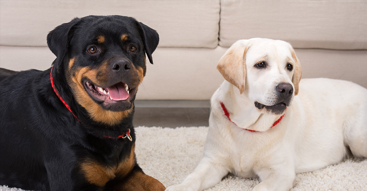 Why Do Dogs Lean On People ?