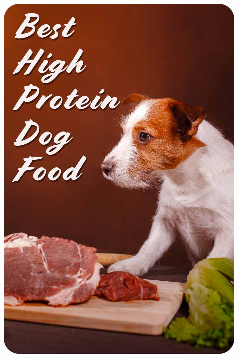 Best High Protein Dog Food - Dog food reviews for dog parents.