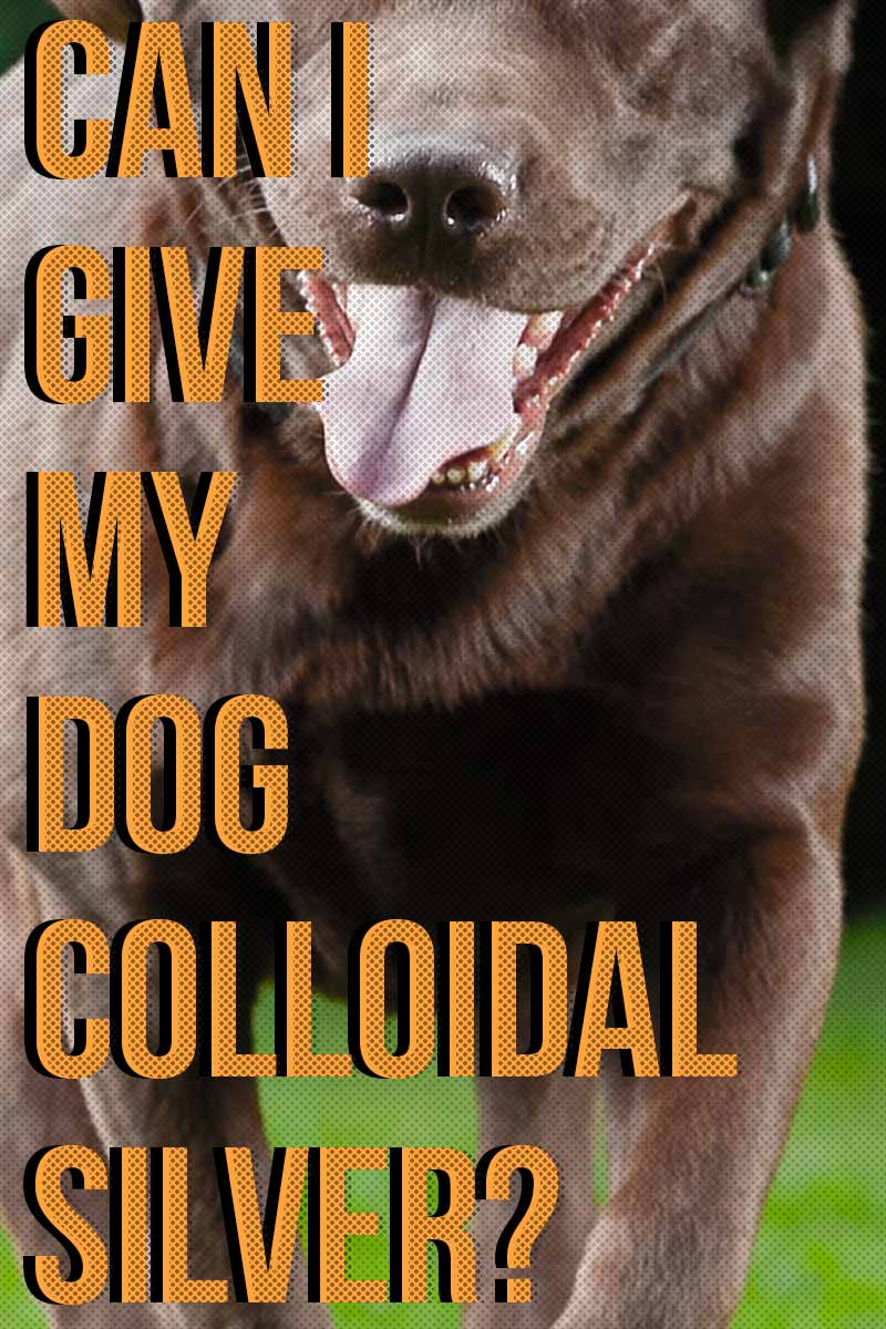 Can I give my dog Colloidal Silver? - Dog care and health information.