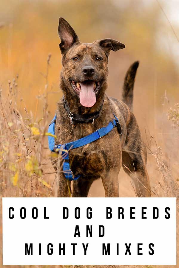 cool dog breeds