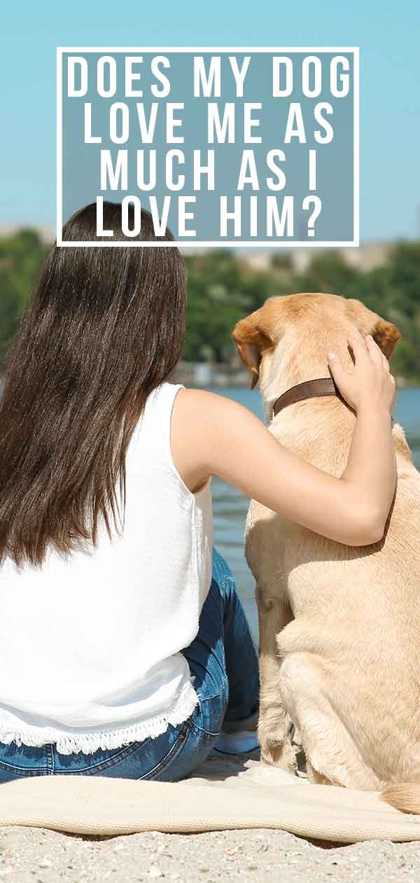 Does My Dog Love Me: Signs Your Dog Loves You