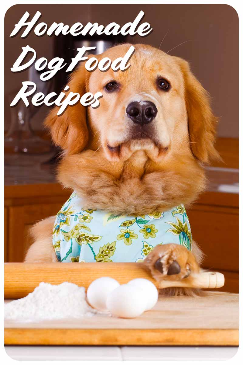 Homemade Dog Food Recipes - Great recipes for dog chefs.