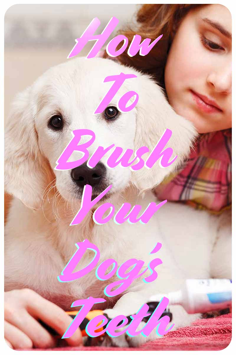 How To Brush Your Dog's Teeth - Dog health and care information.