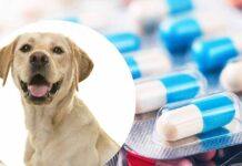 imodium for dogs