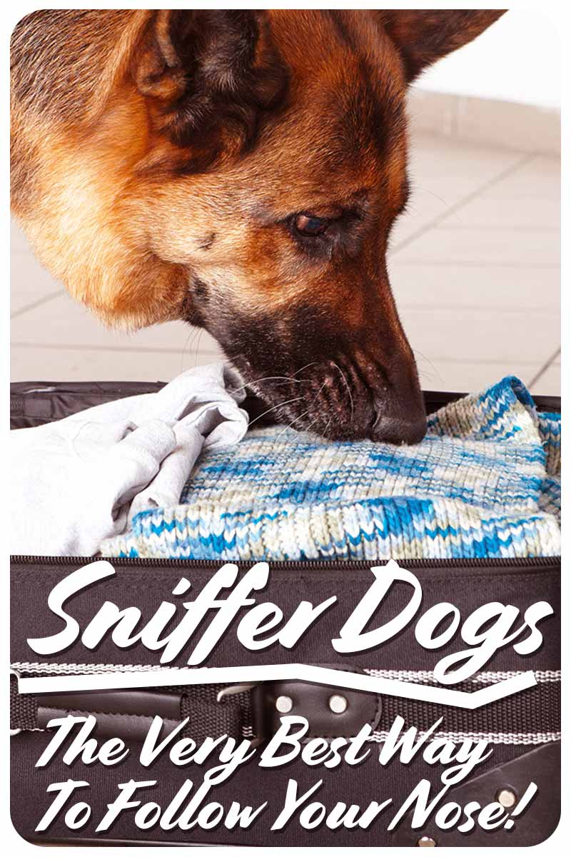 Sniffer Dogs   The Very Best Way  To Follow Your Nose! - Fun facts about dogs.